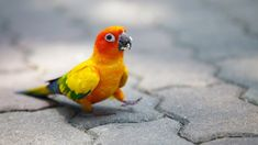 Image result for cute parrot
