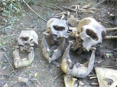 Giant Human Skeleton Unearthed in America - Google Search