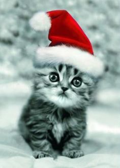 Weihnachtskatze Christmas Kitty Christmas Animals Merry Christmas Christmas Sayings Funny Christmas