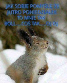 Polish Memes, Man Humor, Pranks, Motto, Good Morning, Jokes, Funny Gifs, Pictures, Animals