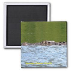 Australian Saltwater Crocodile 2 Inch Square Magnet
