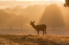 Photo Red Deer at Dawn by Mark Monckton photography on 500px