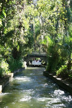 Amy's Creative Pursuits:  Winter Park, Florida Boat Ride, Lake Canal
