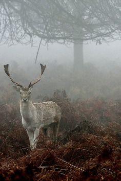 deer, forest and fog Beautiful Creatures, Animals Beautiful, Cute Animals, Wild Life, Natur Wallpaper, Half Elf, Mundo Animal, All Gods Creatures, Jolie Photo