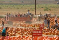 Underwood Family Farm // 18th Annual Fall Harvest Festival // When:  October 3 - October 31, 2015