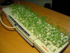 office prank keyboard grass