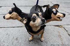 dog costume - cute