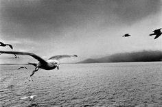 Josef Koudelka. UNITED KINGDOM. Scotland. 1977.