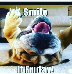 Funny friday puppies: 29 best it's friday! Funny Dog Memes, Funny Video Memes, Videos Funny, Funny Dogs, Its Friday Quotes, Friday Humor, Funny Friday, Dog Photos, Dog Pictures