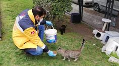 Turkey Issues Order to Feed Stray Animals So They Don't Starve in Pandemic Kittens Cutest, Cute Cats, Adorable Dogs, Dog Pictures, Funny Pictures, Feel Good News, Good News Stories, Human Kindness, German Shepherd Puppies