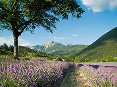 Route de la Lavande en Provence, #France http://campingsitesetpaysagesdefrance.wordpress.com/2012/04/29/route-lavande-provence-vaucluse-drome-provencale-alpes-haute-provence-camping-sites-et-paysages/