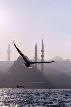 İstanbul Fotoğrafçılık http:// |