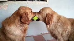 Δύο σκυλιά, One Ball