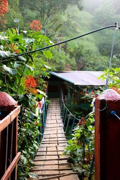 Waking up in the jungle, Colombia