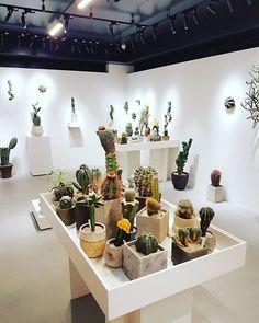 📷 : @beeohbeezy #cactuscollection #succulentcollection #مجموعه_کاکتوس #مجموعه_ساکولنت #🌵 #cactus #succulent #succulents #nature #plant #plants #گیاه #cacti #cacto #kaktus #кактус #サボテン #仙人掌 #선인장 #kaktüs #cactos #Cactaceae #kakteen #کاکتوس #ساکولنت #cactuslover #cactusclub #cactusmagazine #cactuslove #cactuspremium