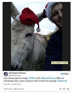 Le #felfie, un selfie version fermiers irlandais  felfie3