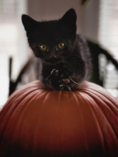 Little black kitten holds tight to a Halloween pumpkin. (wayfaringheart on tumblr, post152080765876)