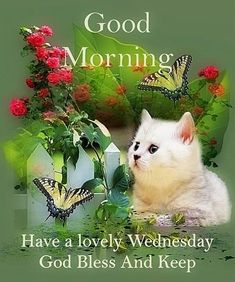 Happy Wednesday Images, Wednesday Morning Greetings, Blessed Wednesday, Good Morning Wednesday, Wednesday Humor, Good Morning Quotes, Keep Dreaming, Funny Happy, Picture Quotes
