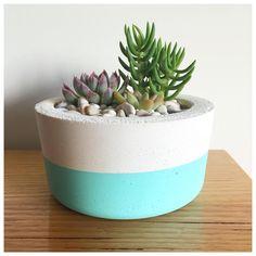 Succulents in concrete pot