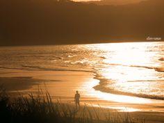 ✣ ...In every walk with nature one receives far more than he seeks...  ✣  John Muir  Photograph; ellen ♥ vaman    www.facebook.com/ellenvaman