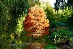 Autumn colours on show at the Sir Harold Hillier Gardens in Romsey, Hampshire
