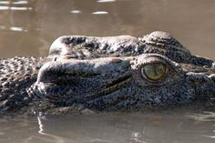 A Yellow Water Cruise to see massive saltwater crocodiles in their natural habitat.