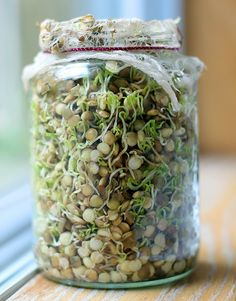 How To Sprout Lentils For Your Chickens #chickens