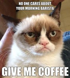 Grumpy Cat - Give Me Coffee
