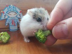 Yummy ! Yummy !
