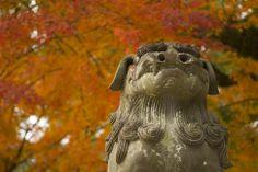 Dazaifu Fukuoka Autumn.
