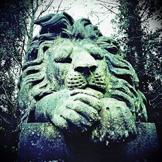 The Lion Sleeps Tonight @ Highgate Cemetery