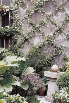 Great statue! Star Jasmine trained over a wire lattice grid in an espalier form transforms a bare wall