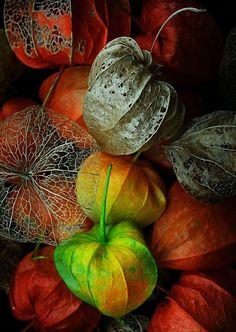 """""""Uma só semente contém mil florestas"""" - Ralph Waldo Emerson - 1803/1888 - Filósofo Americano."""