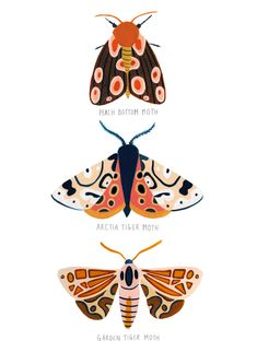 Bugs, Insects, Moth illustration using gouache Art And Illustration, Butterfly Illustration, Food Illustrations, Posca Art, Gouache, Bug Art, Arte Sketchbook, Insect Art, Nursery Wall Art