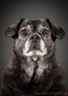 old-dog-portrait-photography-old-faithful-pete-thorne-15