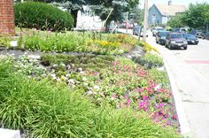 2013 AAS Landscape Design Contest Category I Third Place Winner: Meredith (NH) Public Library Garden