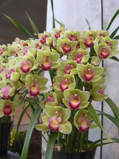 Never will I ever...be able to grow orchids like these. UGH.