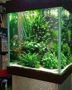 41 best fish tank themes images aquarium ideas aquarium design rh pinterest com