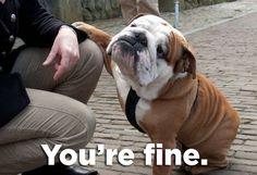 comforting bulldog =)