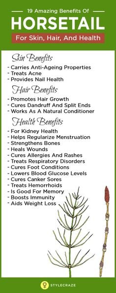 Don't get confused by its unusual name. This 'living fossil' is called horsetail, but its various medicinal properties is what sets it apart from the 'horse's tail.' This perennial puzzlegrass can truly be trusted to take care of all our skin, hair and health woes.