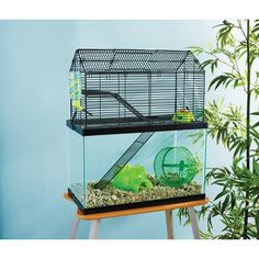 You+&+Me+Small+Animal+High+Rise+Tank+Topper+-+ - http://www.petco.com/shop/en/petcostore/you-and-me-small-animal-high-rise-tank-topper