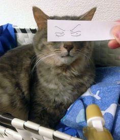 """Cat Owners In Japan Are Giving Their Cats Funny Anime Eyes: There's a brilliant new trend in Japan that has cat owners placing strips of paper with cartoon or anime eyes in front of their cats to give them goofy expressions. It's called the """"cat montage"""" (neko montaaju) and it's hilarious."""