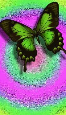 BUTTERFLY IPHONE WALLPAPER BACKGROUND