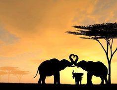 Just a random elephant family...wait!