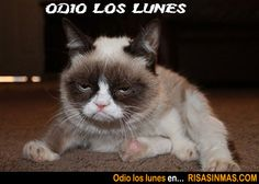 El gato cabreado también odia los lunes.