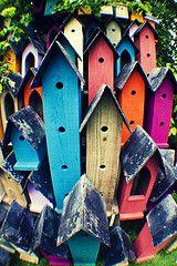 lovely bird houses !!!