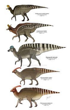 "Lambeosaurine Hadrosaurids Plate2 by Gabriel Uguet - ""Several species of Hadrosauridae: Lambeosaurinae."""
