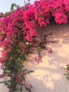 Rita Farhi Finds beautiful flowers in London Flower Background Wallpaper, Photo Background Images, Flower Phone Wallpaper, Flower Backgrounds, Aesthetic Photography Nature, Nature Aesthetic, Flower Aesthetic, Nature Photography, Photography Studio Spaces