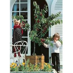 Luna Turquesa:  Ghid de inițiere pentru amenajarea unei grădini d... Plantation, Bonsai, Meilland, Ladder Decor, Outdoor Structures, House, Ideas, Turquoise, Dwarf Cherry Tree