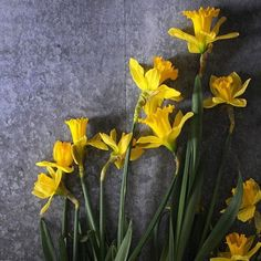 Houseplants That Filter the Air We Breathe Daffodils Frolic - Photo: Chelsea Fuss Flowers Nature, Fresh Flowers, Wild Flowers, Daffodils, Tulips, Daffodil Flowers, My Flower, Flower Power, Tulip Bouquet